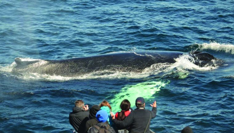 Watch blue whales