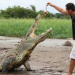 feed crocos ma