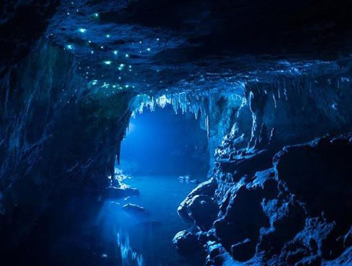 Trip to Waitomo Caves