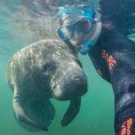 Swim with Manatee